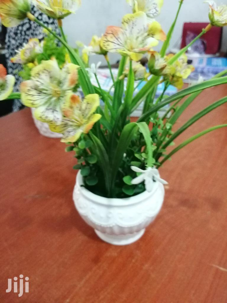 Get Beautiful Mini Cup Flowers For Beautification Of Gardens For Sales