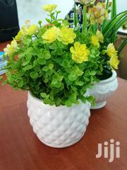 Beautiful Flowers On Cups For Sale | Garden for sale in Cross River State, Boki
