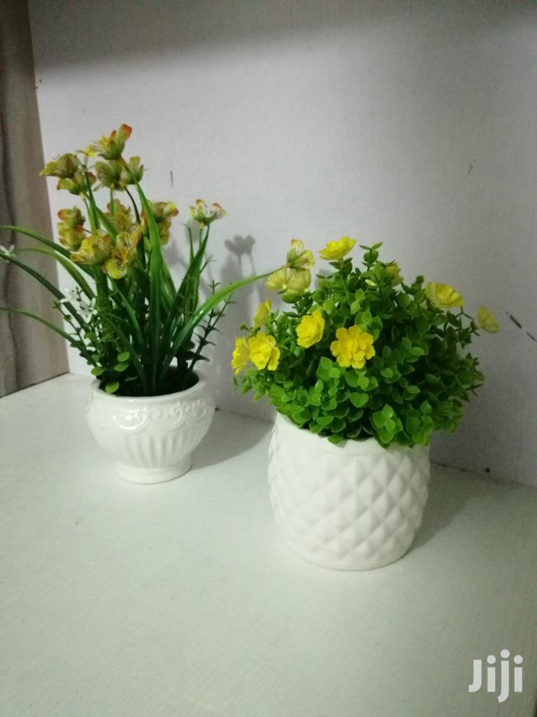 Get Decorative Mini Beautiful Cup Flowers | Garden for sale in Ipaja, Lagos State, Nigeria