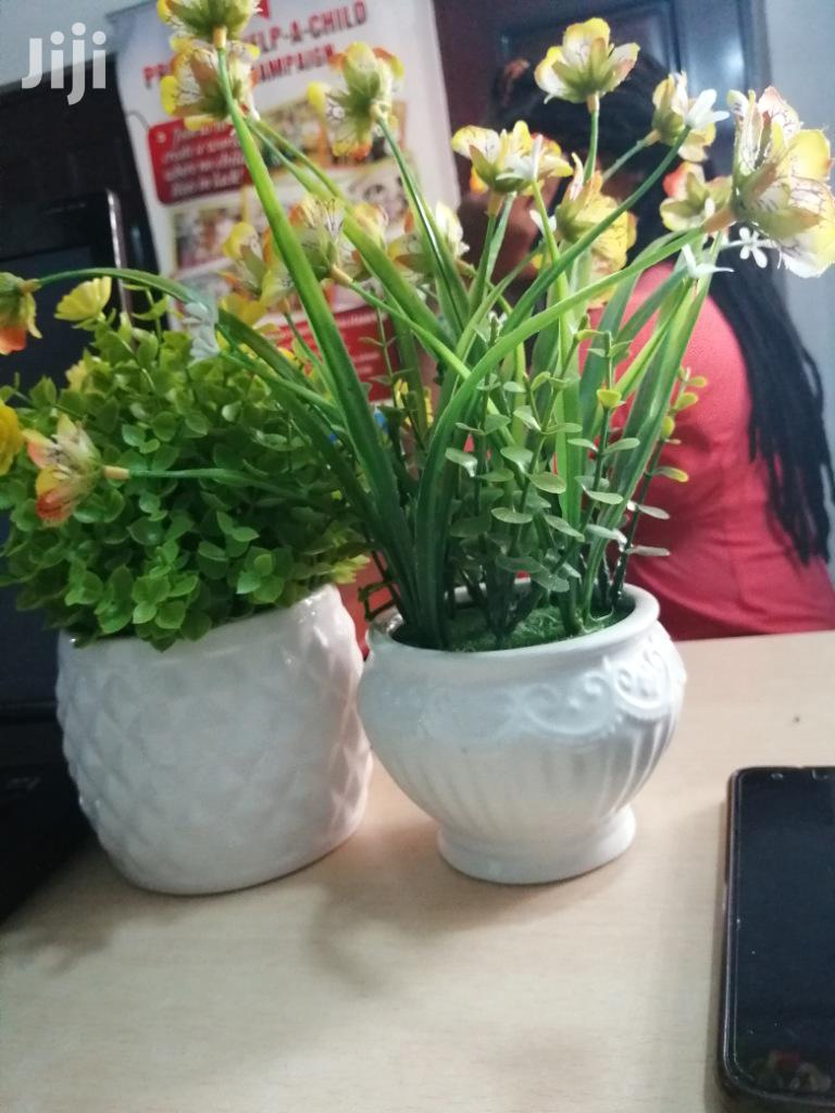 Decorative Mini Potted Flowers For Beautification Of Homes/Office