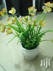 Well Potted Cute Cup Flowers For Decoration At Sales | Garden for sale in Akwa Ibom State, Ikot Abasi