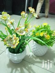 Cup Flowers | Garden for sale in Bauchi State, Ganjuwa