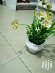 Beautiful Cup Mini Flowers   Garden for sale in Benue State, Agatu