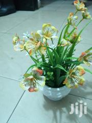 Affordable Beautiful Mini Cup Flowers For Decor | Garden for sale in Benue State, Buruku