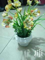 Indoor Decorative Cup Flowers At Sales To Bulk Buyers Nationwide -- | Garden for sale in Borno State, Bama