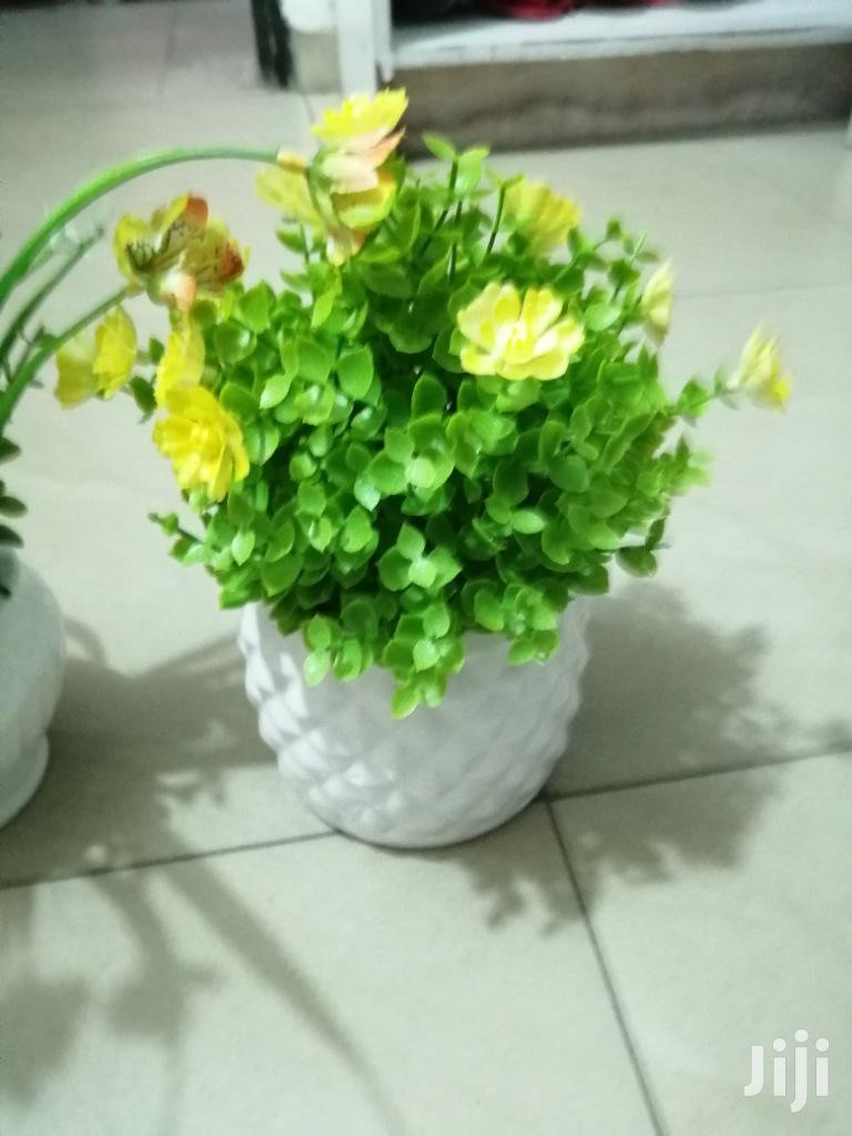 Get Beautiful Mini Potted Cup Flowers