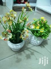 Get Indoor/Outdoor Mini Cup Flowers For Decoration | Garden for sale in Ekiti State, Ijero