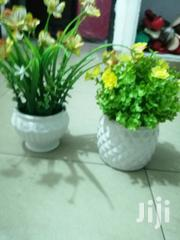 Get Well Potted Beautiful Cup Flowers At Affordable Prices | Garden for sale in Imo State, Ideato North