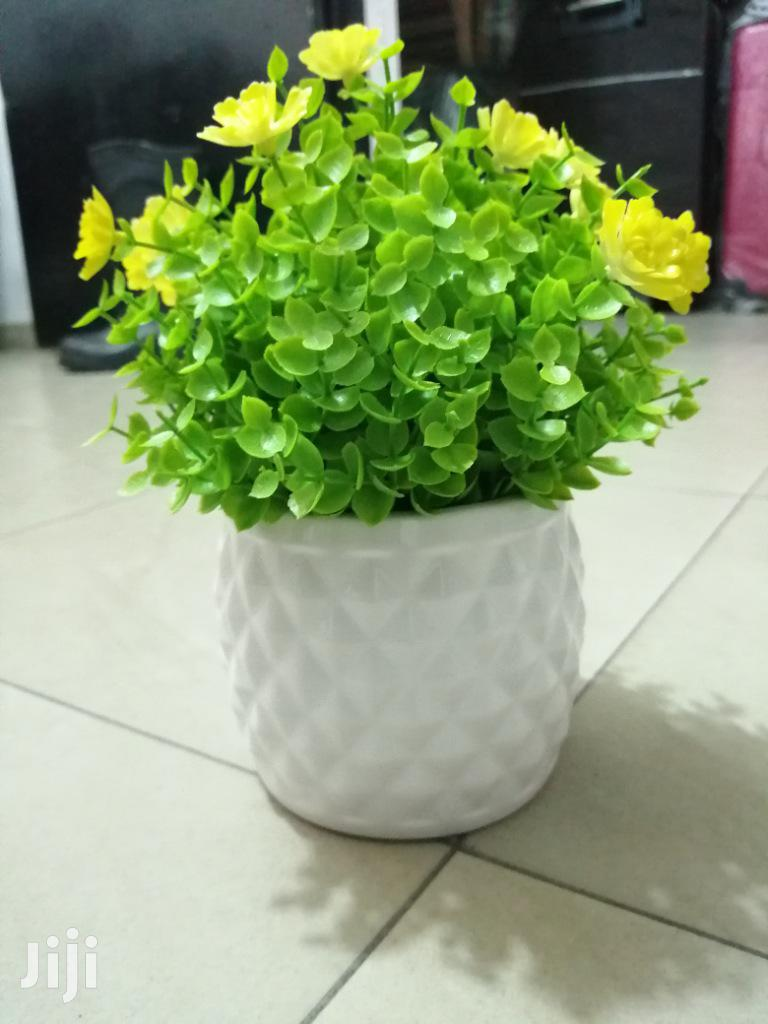 Make Beautiful Decoration With Mini Potted Cup Flowers