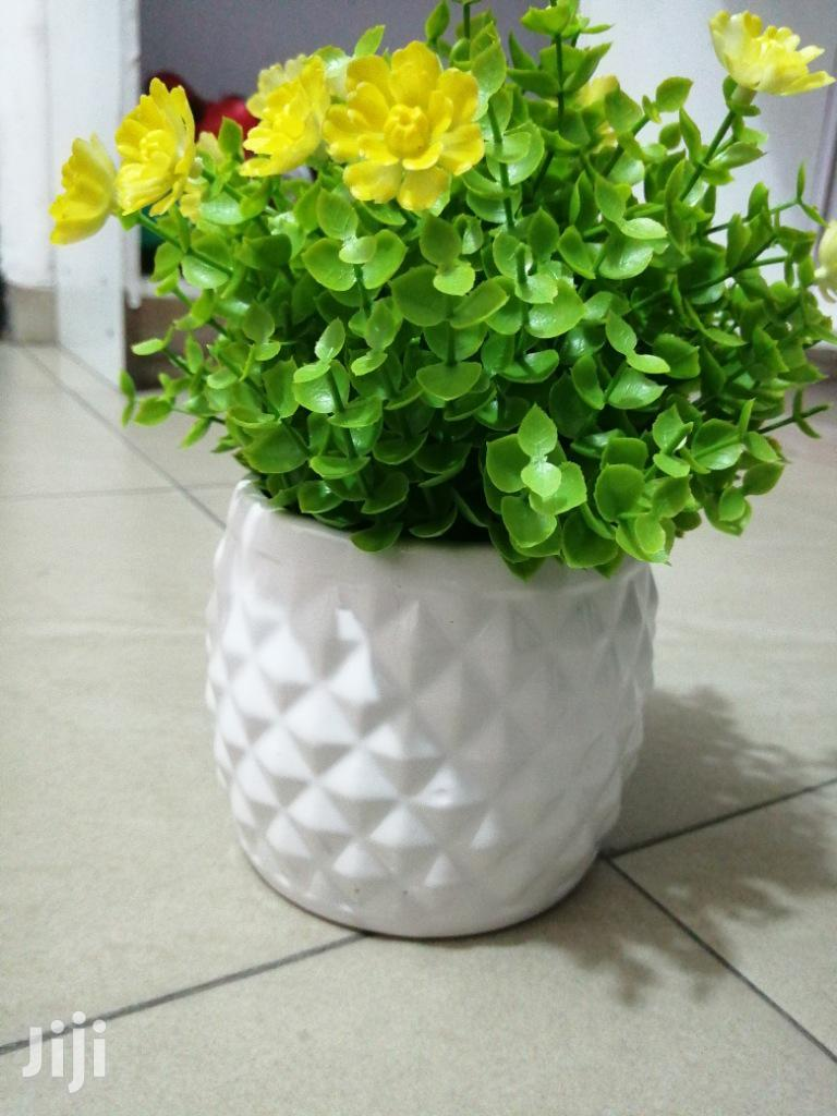 Make Beautiful Decoration With Mini Potted Cup Flowers | Garden for sale in Dutse-Jigawa, Jigawa State, Nigeria