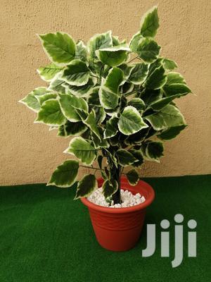 Artificial Indoor Plantain Tree | Garden for sale in Lagos State, Ikotun/Igando