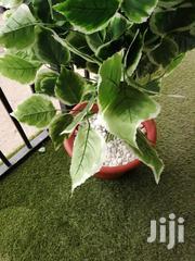 Indoor Pot Flower | Garden for sale in Adamawa State, Girei