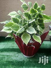 Adorable Flower Vase Planter In Nigeria | Home Accessories for sale in Rivers State, Akuku Toru