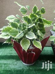 Order For Affordable Flower Vase Planter   Home Accessories for sale in Kano State, Dala