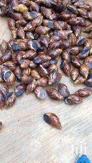 Snails To Your Taste | Meals & Drinks for sale in Lagos State, Surulere