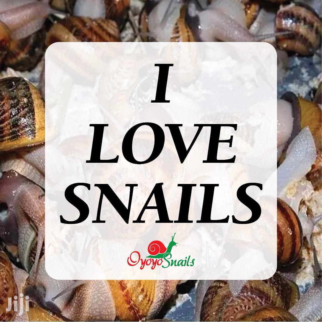 Snail Is Good To Eat.