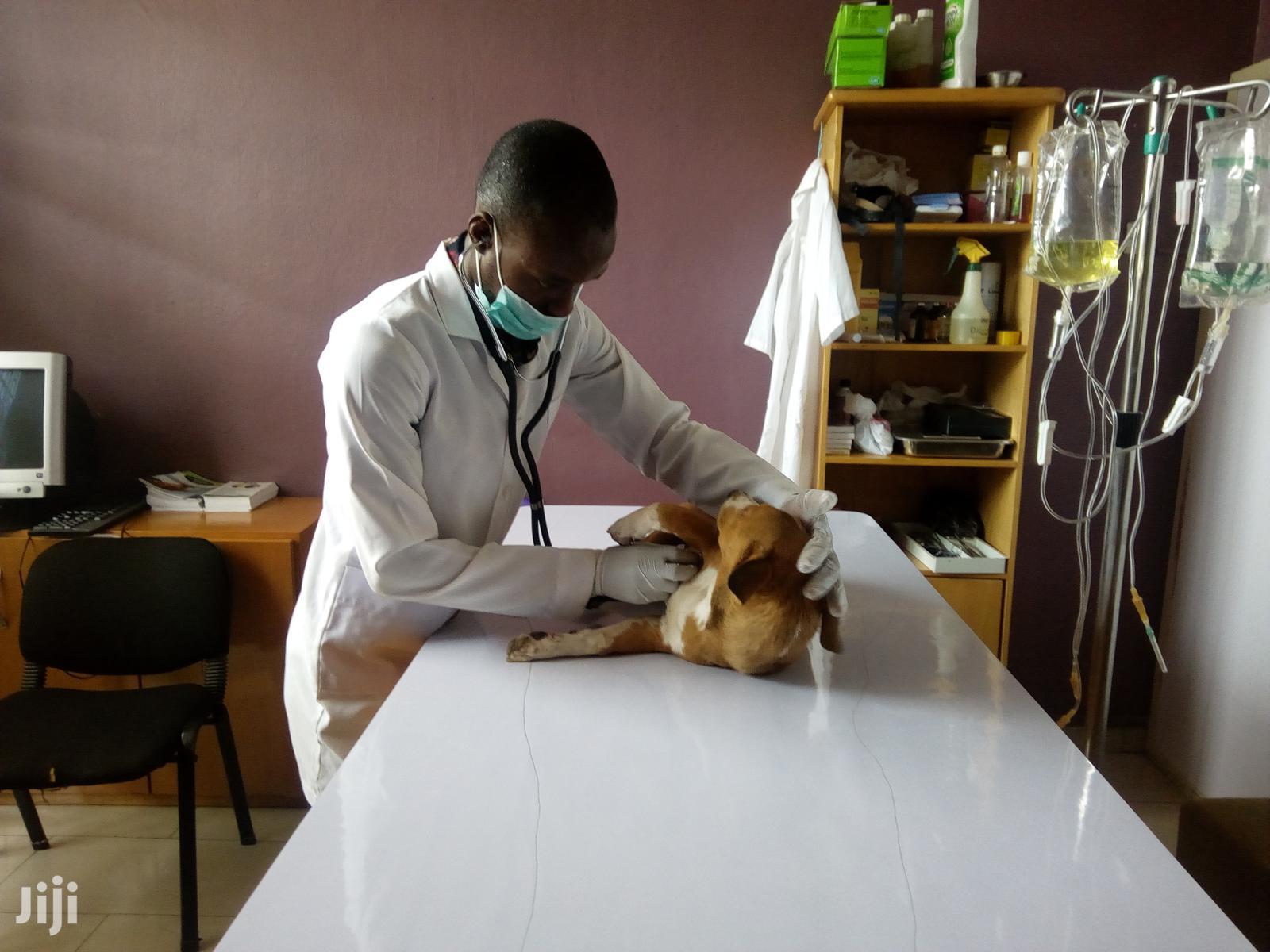 Vetcribs Veterinary Services | Pet Services for sale in Utako, Abuja (FCT) State, Nigeria