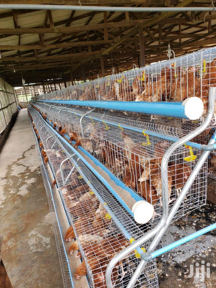 Dekoraj Battery Cage Now In Abuja   Farm Machinery & Equipment for sale in Bwari, Abuja (FCT) State, Nigeria
