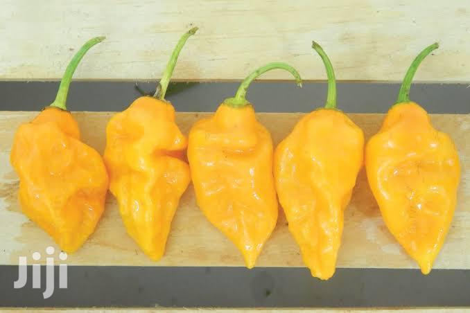 Yellow Pepper Seeds Organic Seeds