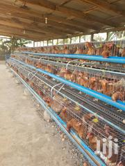 New Battery Cage For Layers   Farm Machinery & Equipment for sale in Lagos State, Oshodi-Isolo
