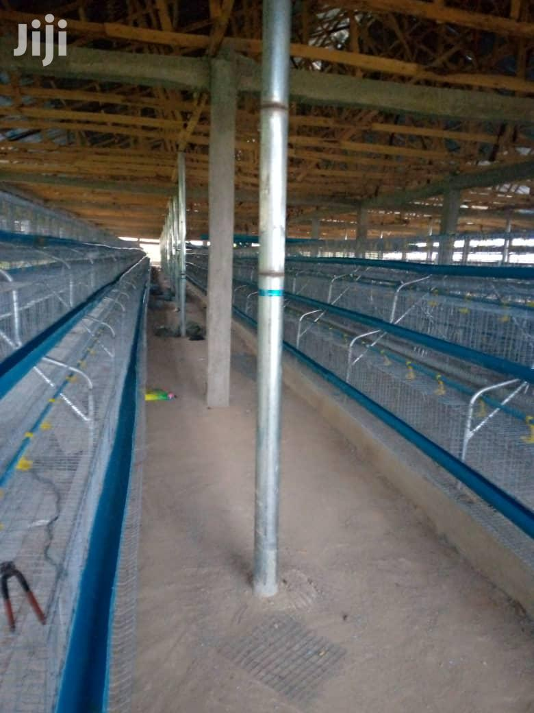 Super Layers Battery Cage