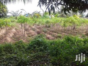 3 Acres of Functional Farmland for Sale at Oko Afo Badagry. | Land & Plots For Sale for sale in Lagos State, Badagry