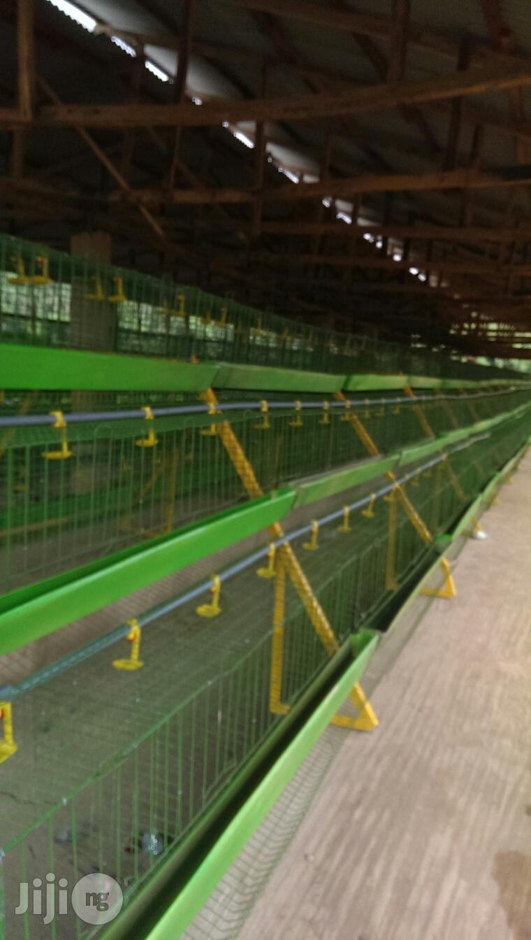 Automatic Battery Cages For Laying Birds