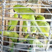 Parakeet For Sale | Birds for sale in Lagos State, Lagos Island