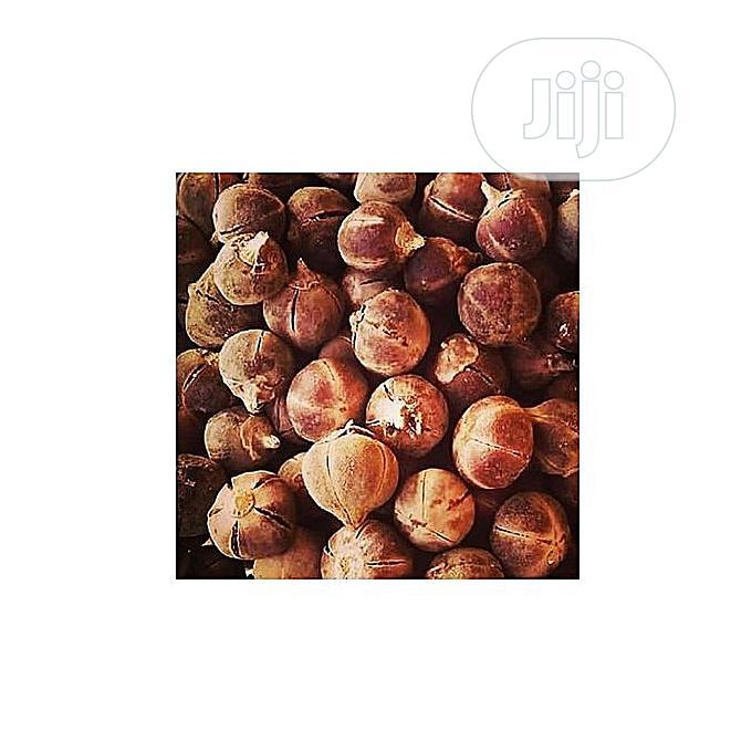 Archive: Gorontula Seed X 200