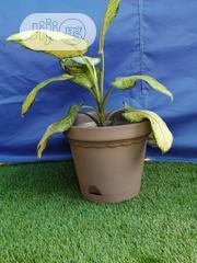 Big Flower Pots For Sale | Garden for sale in Abia State, Umu Nneochi