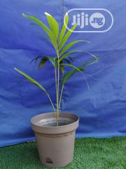 Flower Pot Blossom For Sale | Garden for sale in Adamawa State, Toungo