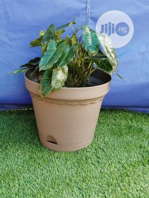 Buy Brown Plastic Flower Pots | Garden for sale in Adamawa State, Mubi North