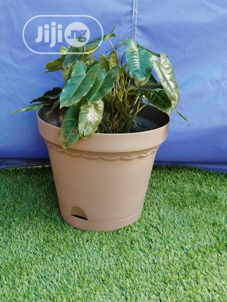 Buy Brown Plastic Flower Pots