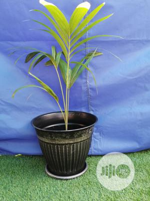 Durable And Quality Flower Pots | Garden for sale in Adamawa State, Guyuk