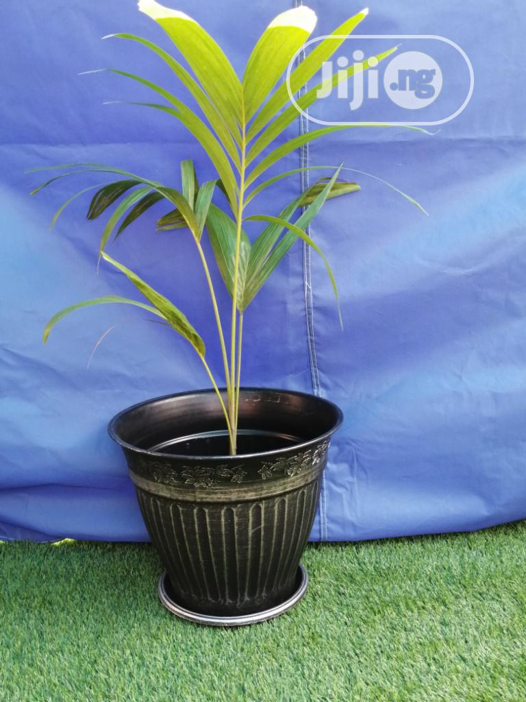 Durable And Quality Flower Pots