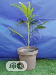 Round Interior Design Flower Pots | Garden for sale in Cross River State, Boki