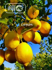 Lemon Seedling For Sale | Feeds, Supplements & Seeds for sale in Oyo State, Ibadan