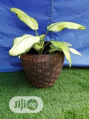 Plastic Flower Pots Planters | Garden for sale in Kano State, Kibiya