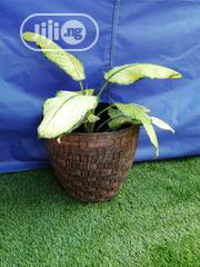Fabulous Interior Flower Pots For Sale | Garden for sale in Yobe State, Fune
