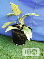 Flower Pot For Home Decor | Garden for sale in Adamawa State, Toungo