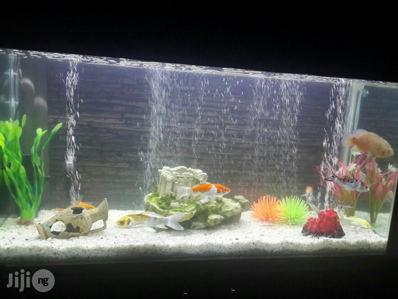 Archive: Aquatech Aquarium