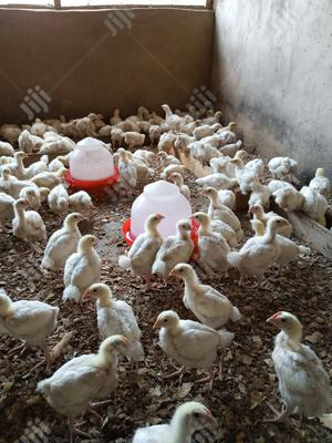 4 Weeks Broilers And Cockerel Available For Sale | Livestock & Poultry for sale in Lagos State, Ipaja