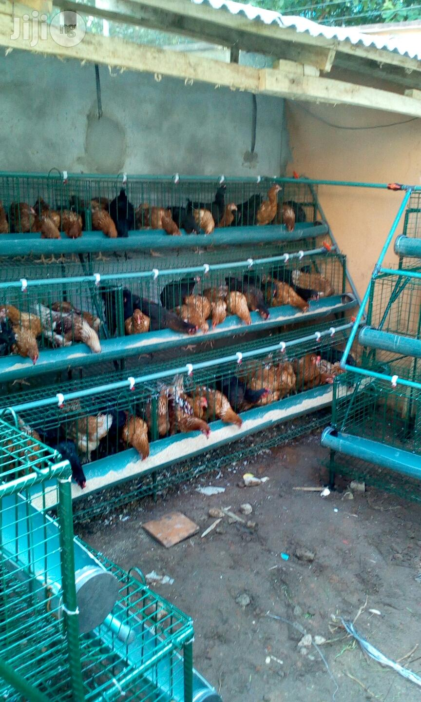 Hopico Battery Cage For Sale   Farm Machinery & Equipment for sale in Alimosho, Lagos State, Nigeria