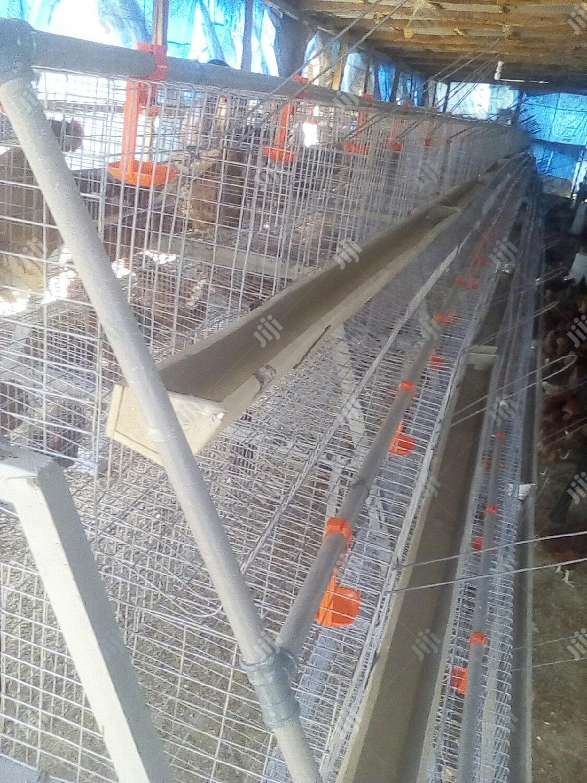 Standard Layer/Broiler Chicken Cage