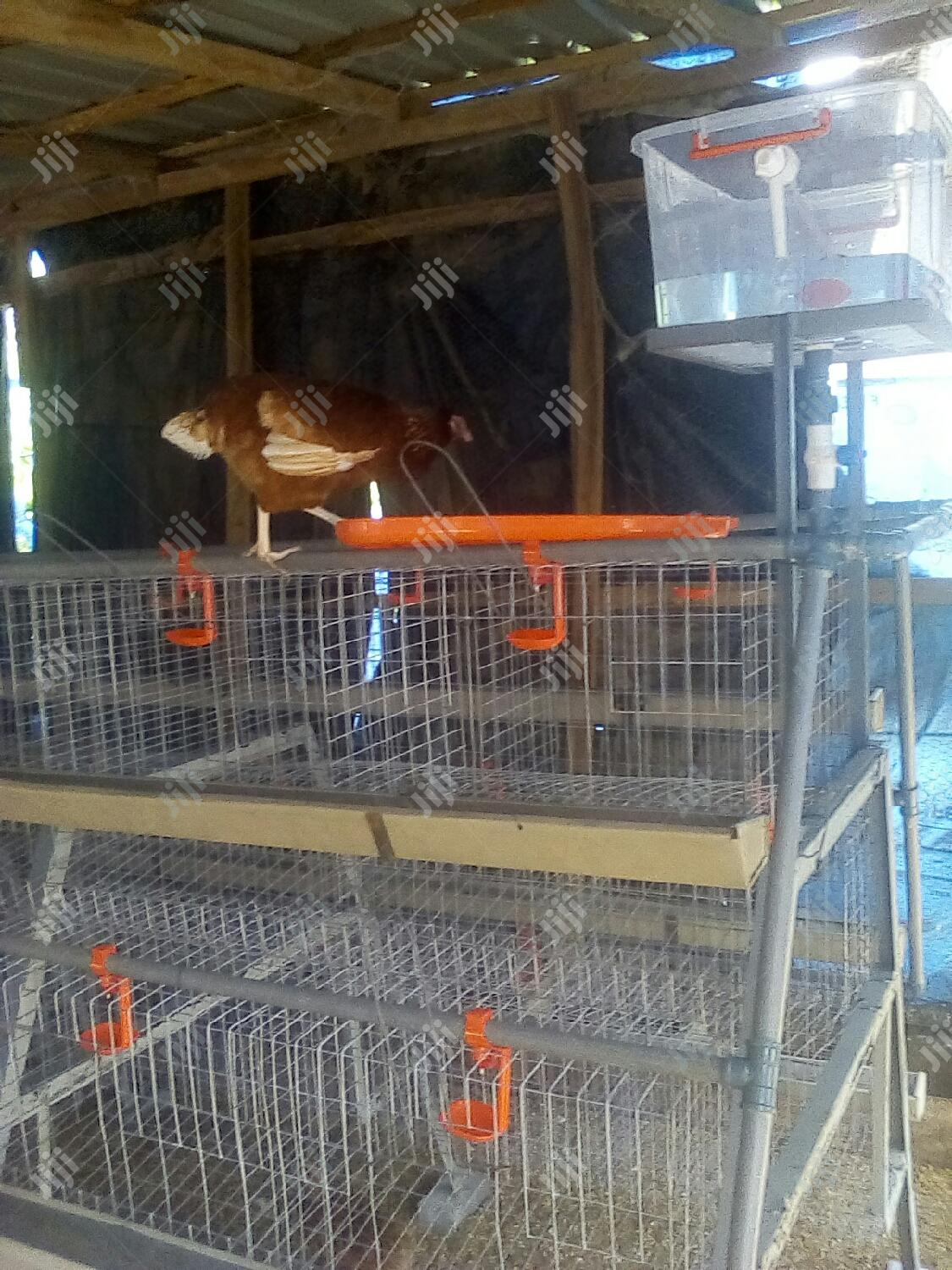 Standard Layer/Broiler Chicken Cage | Farm Machinery & Equipment for sale in Karu, Abuja (FCT) State, Nigeria