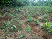 Acres Of Land | Land & Plots For Sale for sale in Ondo State, Idanre