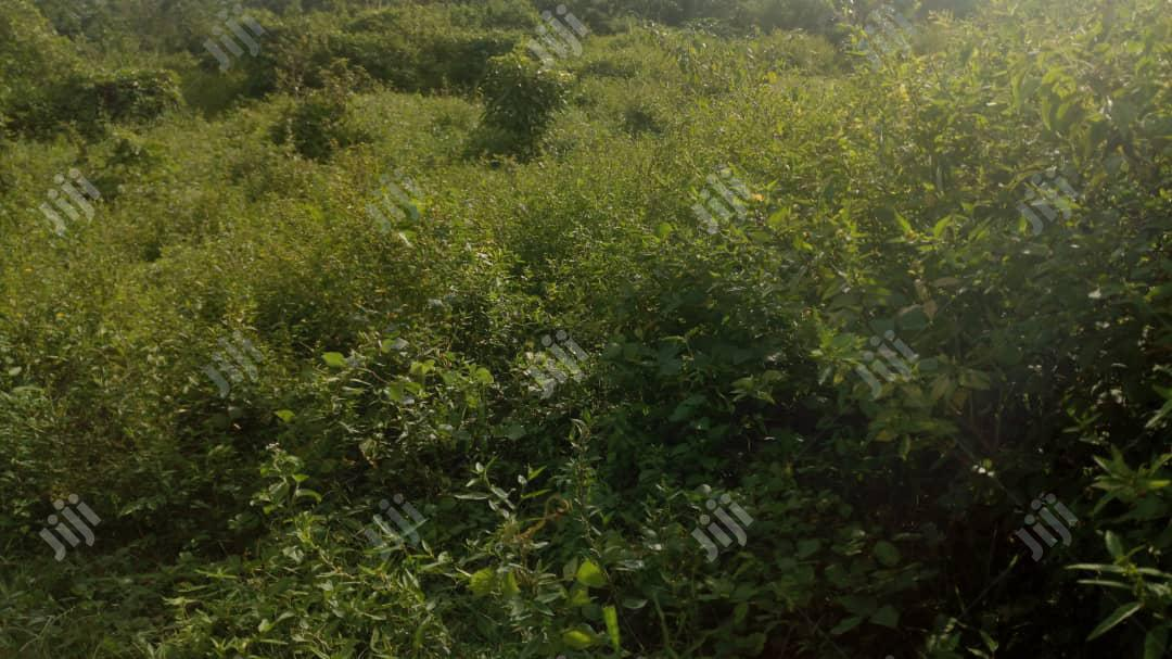 Archive: 2 Plots Of Land Ifelodun Estate