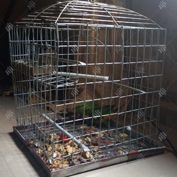 Super Couple Cute Parrot Senegalese | Birds for sale in Kaduna, Kaduna State, Nigeria