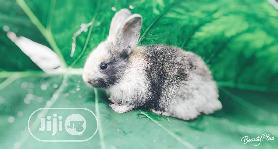GOE Animals-young Rabbits For Sale