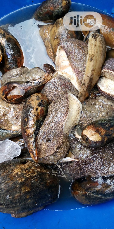 Sea Snails